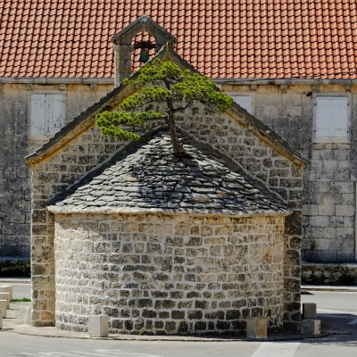 Tree in roof, Croatia.